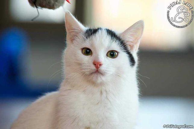 Cudowna koteczka Sisi:)