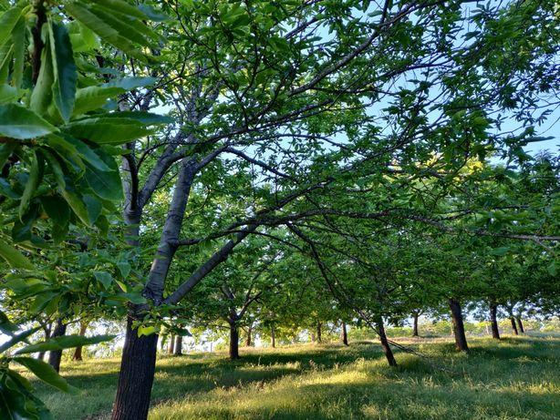 Quinta de Castanheiros com 30 hectares, com armazém