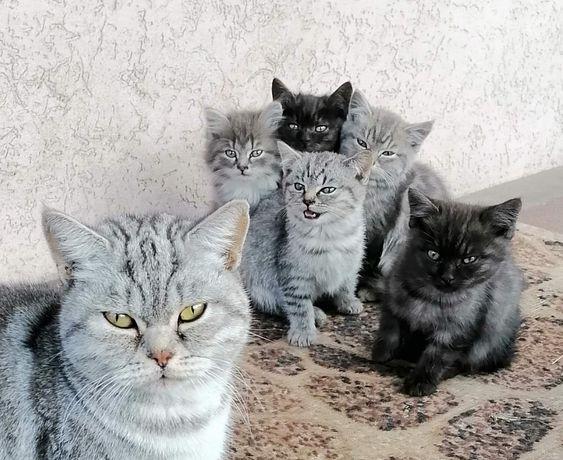 Котенята,  кішки і коти