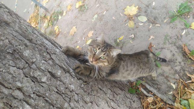 Найден полосатый котик в районе КПИ