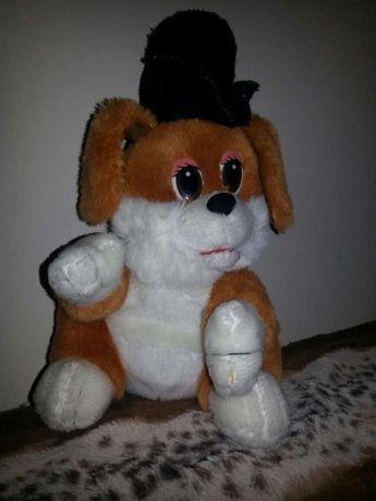 Pies w kapelusxu