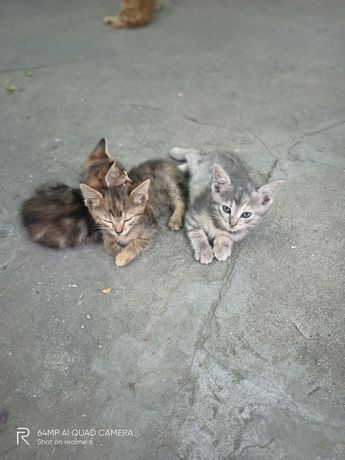Котята в добрые руки бесплатно!!! рыжие обрели семью!!!