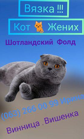Вязка , кот жених