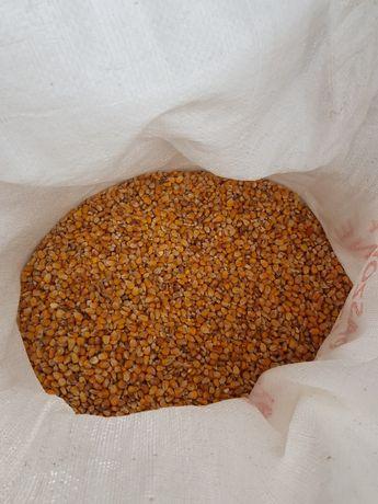 Kukurydza sucha paszowa workowana, luz, big bag