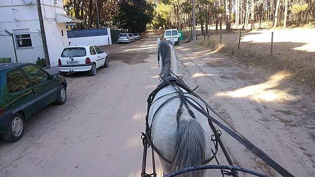 Cavalo engatado e montado cruzado
