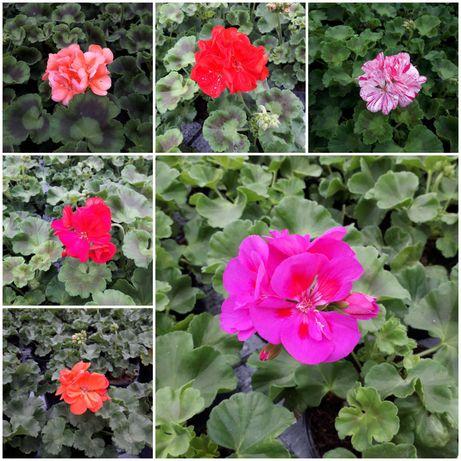 Kwiaty od producenta