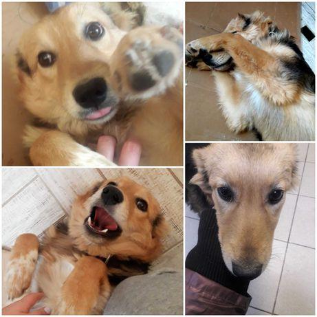 Найдена очень ласковая девочка щенок-подросток