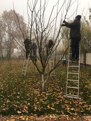 Обрезка деревьев, благоустройство участка, посадка растений