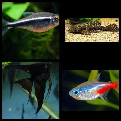Ryby akwarystyczne