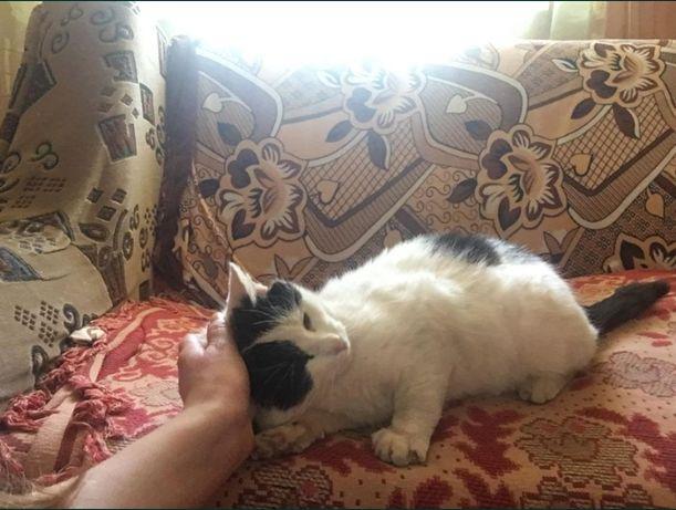 Гарний котик шукає дім