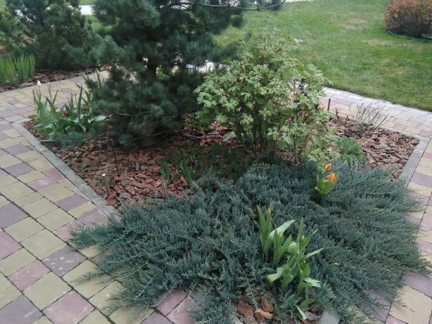 Услуги Садовника покос травы