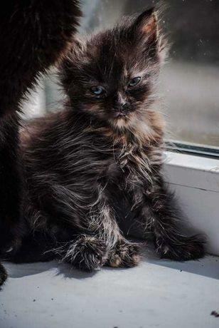 Віддам котеня у добрі руки!!