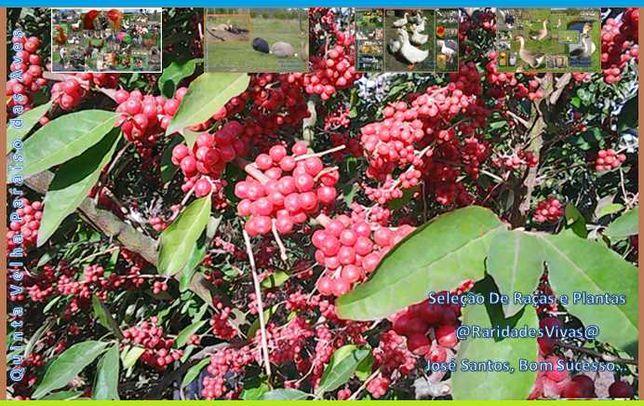 Árvores de Fruto com Qualidade (envasadas e enraizadas)