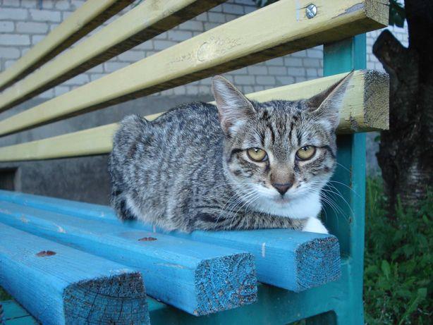 Котенок (кошка) Дэни, 6 месяцев. Ищет дом и доброго хозяина