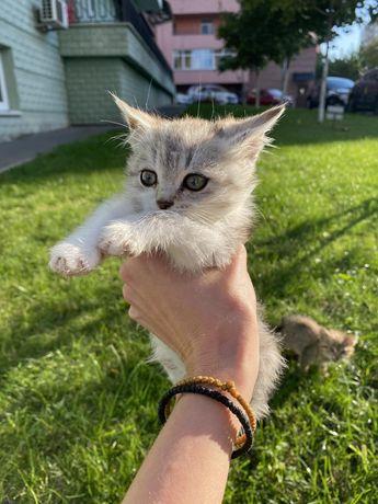 Котёнок, мальчик Зефир, 2 месяца. Из приюта. Есть доставка.