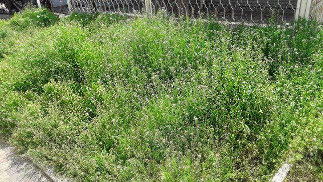 Трава свіжа соковита безкоштовна