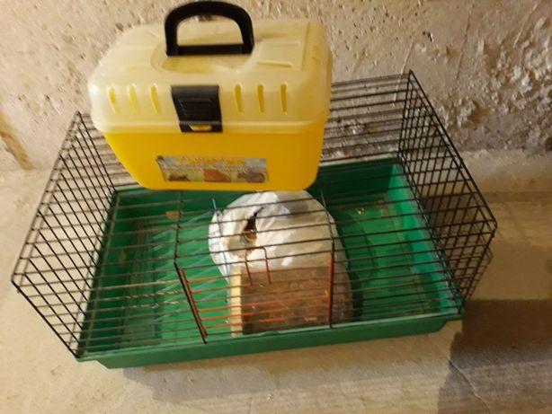 Klatka + transporter dla świnki chomika