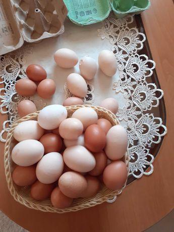 Sprzedam jajka wiejskie TANIO