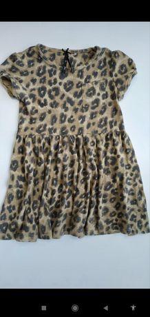 Next cudna sukienka Panterka bawełna 116cm vint