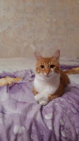 Пропал кот! Рыже-белый.