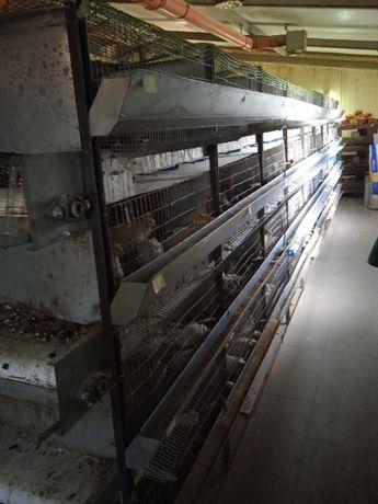 Profesjonalny regał klatka dla przepiórek królików, szynszyli, drobiu
