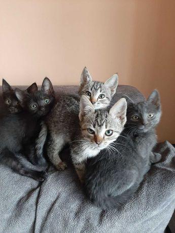 Котята ждут именно тебя!