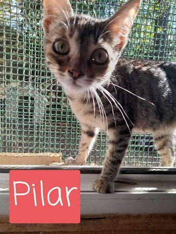 Pilar - Para Adopção