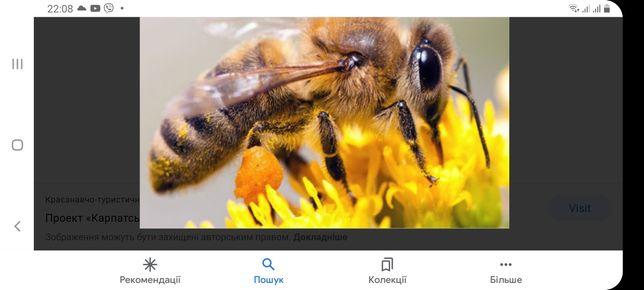 Бджоли. Вулики. Сім'ї