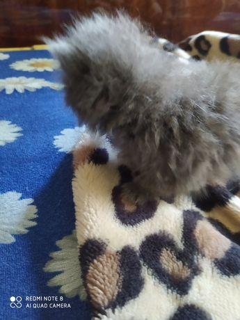 Котята бесплатно в добрые руки