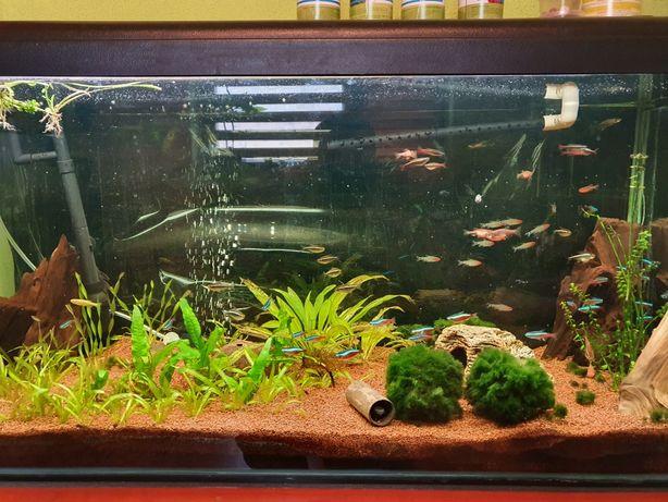 Ryby akwariowe plus rośliny i pokarm gratis