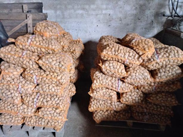 Sprzedam ziemniaki odpadowe (paszowe)