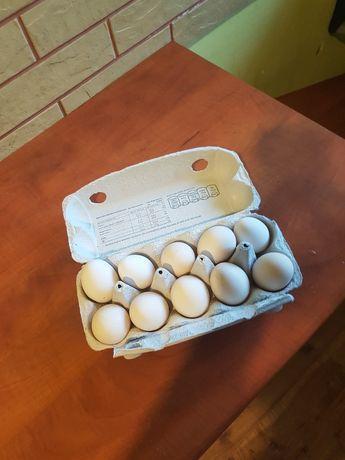 Jaja jajka od kur zielononóżki
