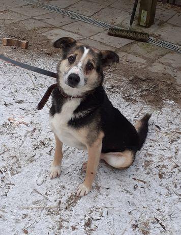 Wspaniały pies Kuba szuka domu. Pies do adopcji