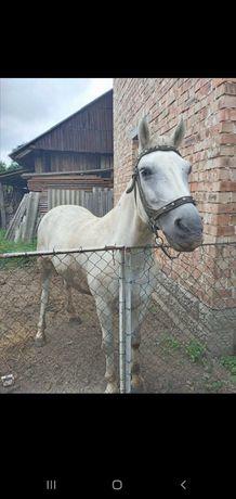Свійська тварина, кінь