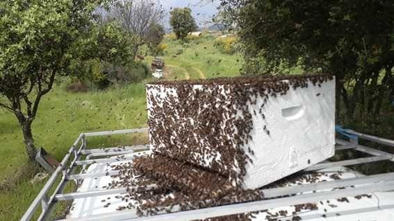 Enxames de abelhas. Modelo reversível, lusitano ou langstroth