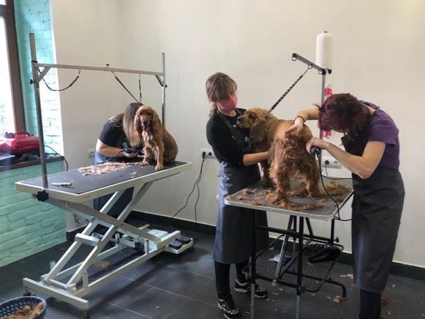 Грумінг салон, стрижка собак та котів | (Центр)