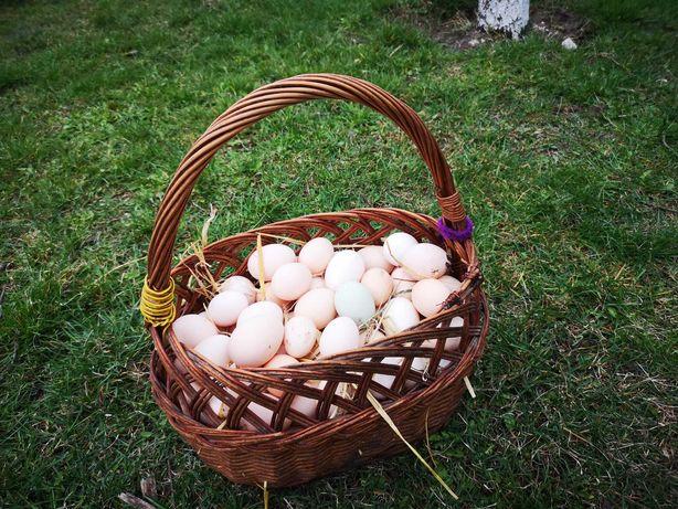 Wiejskie jajka, kurczaki, kaczki.