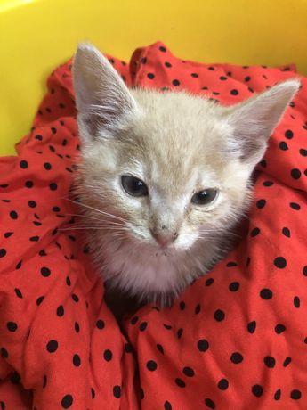 Котенок ищет заботу и дом