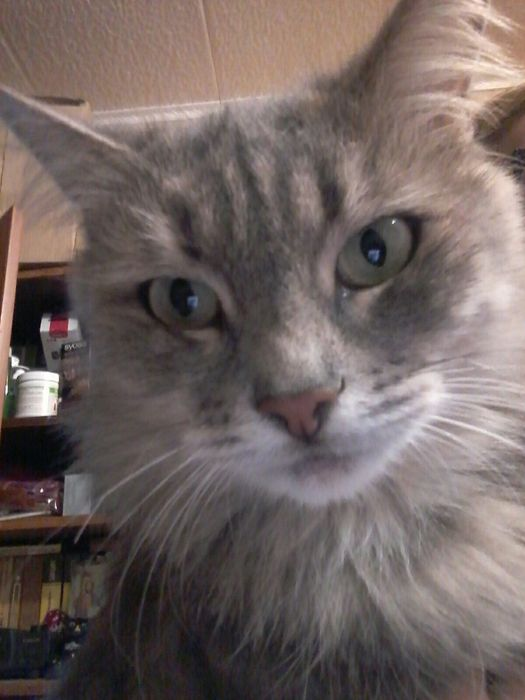 Кошечка ласковая Бесплатно Кривой Рог - изображение 1