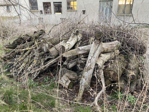 Drewno opał gałęzie za darmo