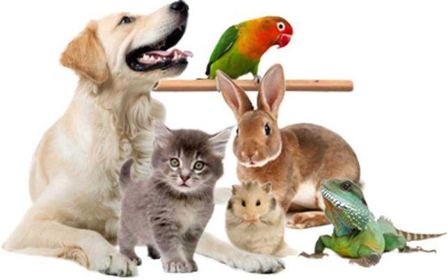Зоотовары, товары для животных.