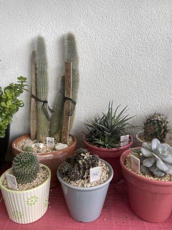 Suculentas/ cactos/ jardim