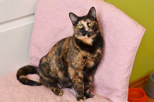Трехцветное чудо Маргарет 1 годик (кошка, кот, котята) ищет семью