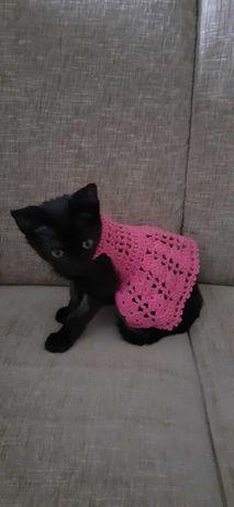 Roupa em tricot para gatos e caes