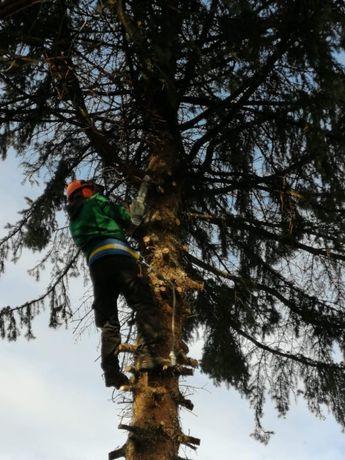 Wycinka drzew oraz usuwanie drewna i gałęzi.