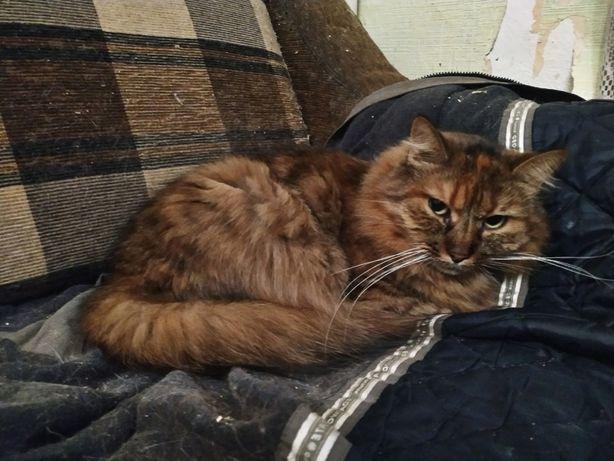 Симпатичная пушистая кошка Тоня, кошечка