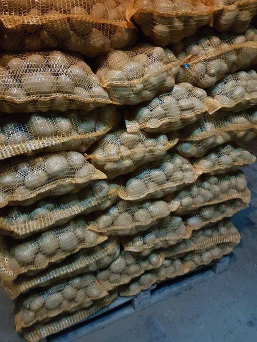 Ziemniaki Vineta Budzieszowce - image 1