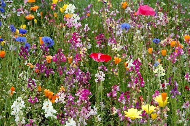 Woreczek i nasiona kwiatów traw dla pszczół kwiaty łąka kwietna 10gram