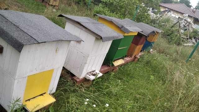 Ule WIELKOPOLSKIE z pszczolami 6 sztuk