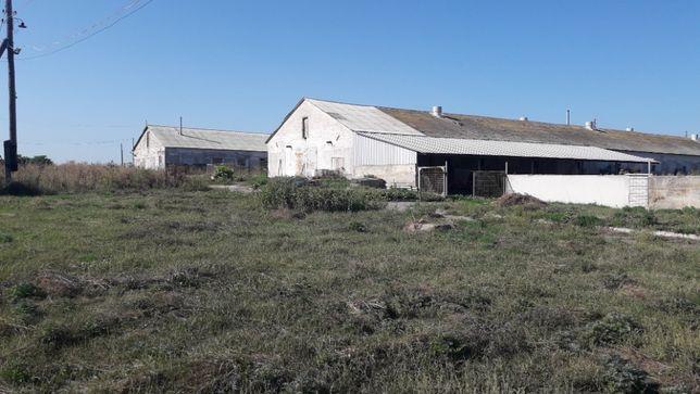 Продам ферму для выращивания свиней, свинокомплекс
